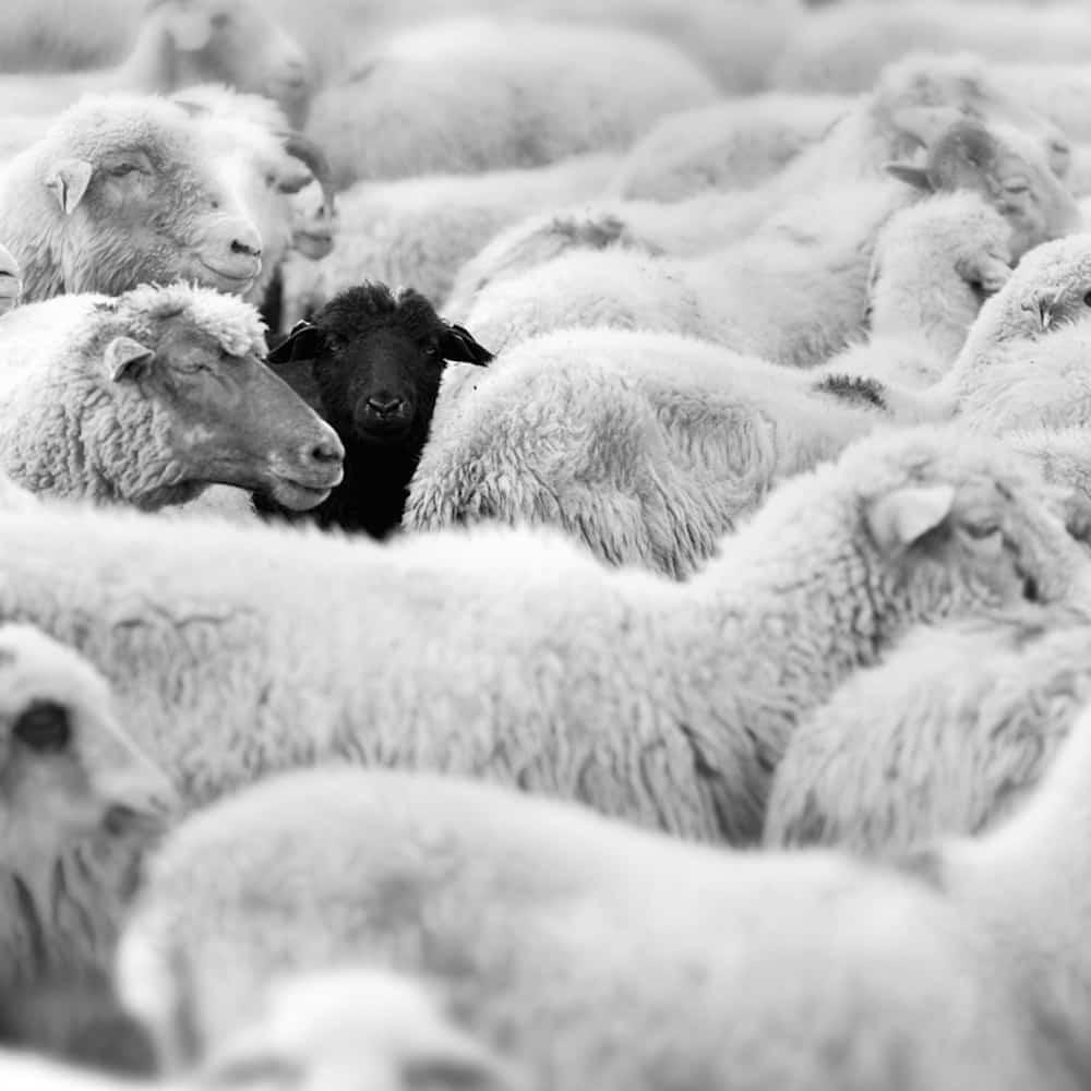 The Week of Wool